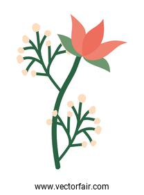 Isolated red flower ornament with leaves vector design