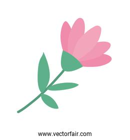 Isolated pink flower ornament with leaves vector design