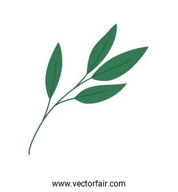 Isolated green leaf icon vector design