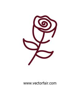 Isolated natural rose flower vector design