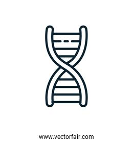 Isolated dna structure vector design