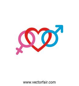 Heart with female and male gender symbols vector design