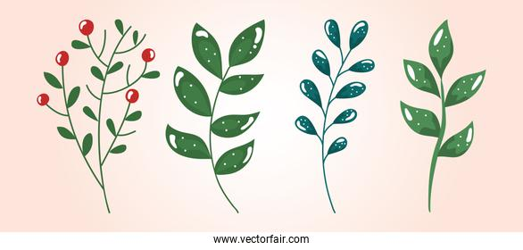 set of branches with leafs and seeds