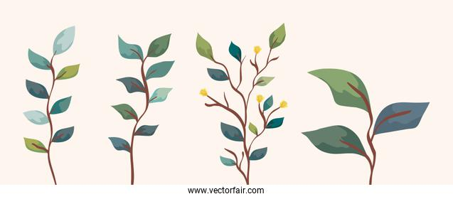 set of branches with leafs nature