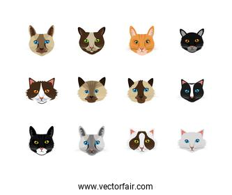bundle faces of cats feline animals icons