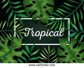 background of leafs tropical natural