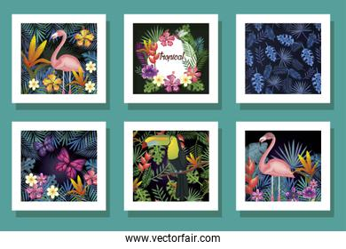 bundle of designs animals with flowers tropicals