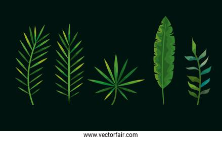set of leafs tropicals nature