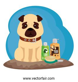 little dog with cleaning icons