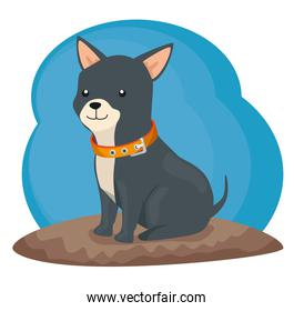 cute little dog animal with necklace