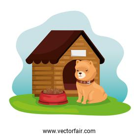 little dog with wooden house and dish food
