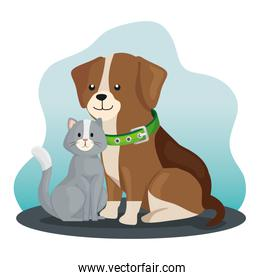 little dog and cat animals