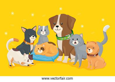 group of little dogs and cats over yellow