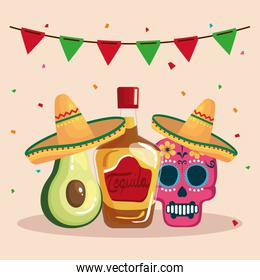 Mexican tequila bottle avocado and skull with hat vector design