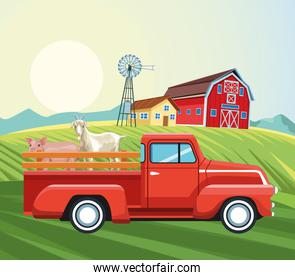 farming barn house windmill pickup goat and pig field