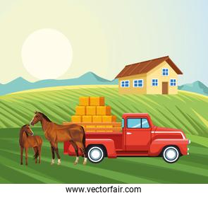 farming house horses pickup truck with bales of hay meadow