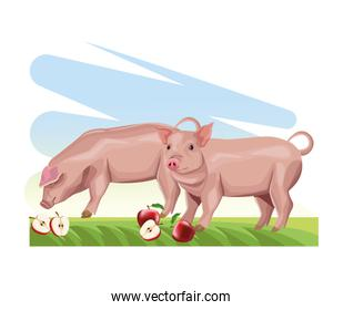 farming pigs eating fresh apples in the grass