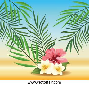 summer time in beach vacations exotics flowers foliage tropical sand