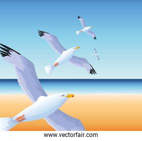 summer time in beach vacations flying seagulls over sea