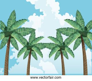 palms tree clouds sky decoration tropical background