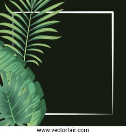 tropical leaves foliage palms exotic banner black background