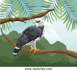 eagle on branch tropical fauna and flora landscape