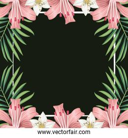 hibiscus flowers exotic decoration leaves tropical banner