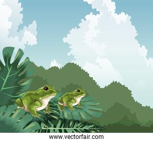 frogs on monstera leaves tropical fauna and flora landscape