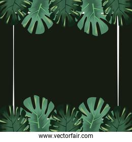 monstera leaves foliage exotic flora tropical banner