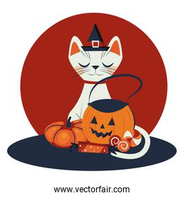 halloween cat disguised of witch character