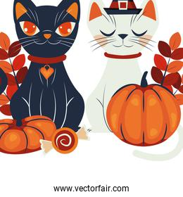halloween cats disguised of characters