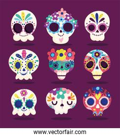 day of the dead, set catrinas flowers decoration traditional celebration mexican