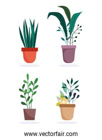 potted plants foliage decoration interior isolated design