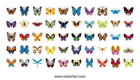 bundle of butterflies set icons