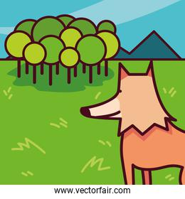 wild fox on a nature landscape