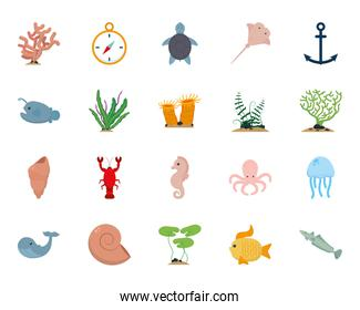 Isolated sea icon set vector design