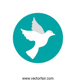 cute dove bird flying icon