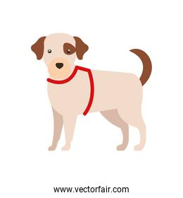 cute dog white with stain brown color