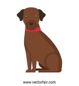 cute dog brown color isolated icon