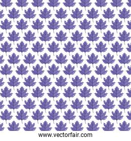background purple leaves maple foliage pattern