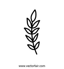 branch leaves foliage natural on white background thick line
