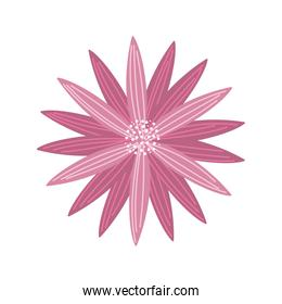 pink flower decoration nature on white background