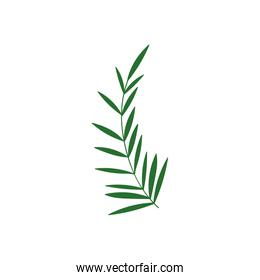 foliage leaves branch nature icon
