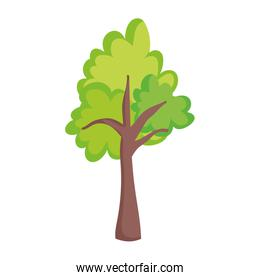 tree greenery foliage nature isolated icon on white background