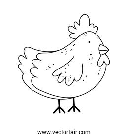 hen poultry farm animal isolated icon on white background line style