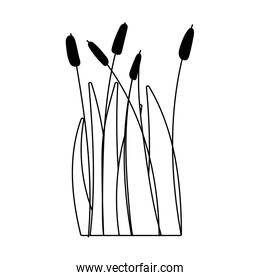 reed plant leaf grass swamp lake and river isolated icon on white background line style
