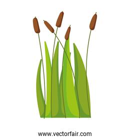 reed plant leaf grass swamp lake and river isolated icon on white background