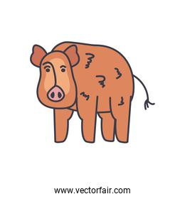 pig animal icon, fill style