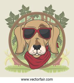 funny dog with sunglasses cool style