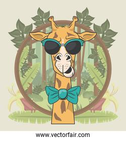funny giraffe with sunglasses cool style